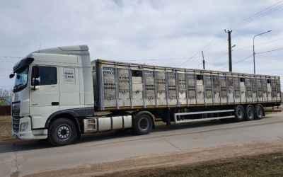 Перевозка животных и скота 8-965-920-08-80 - Ставрополь, цены, предложения специалистов
