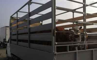 Услуги скотовоза - Буденновск