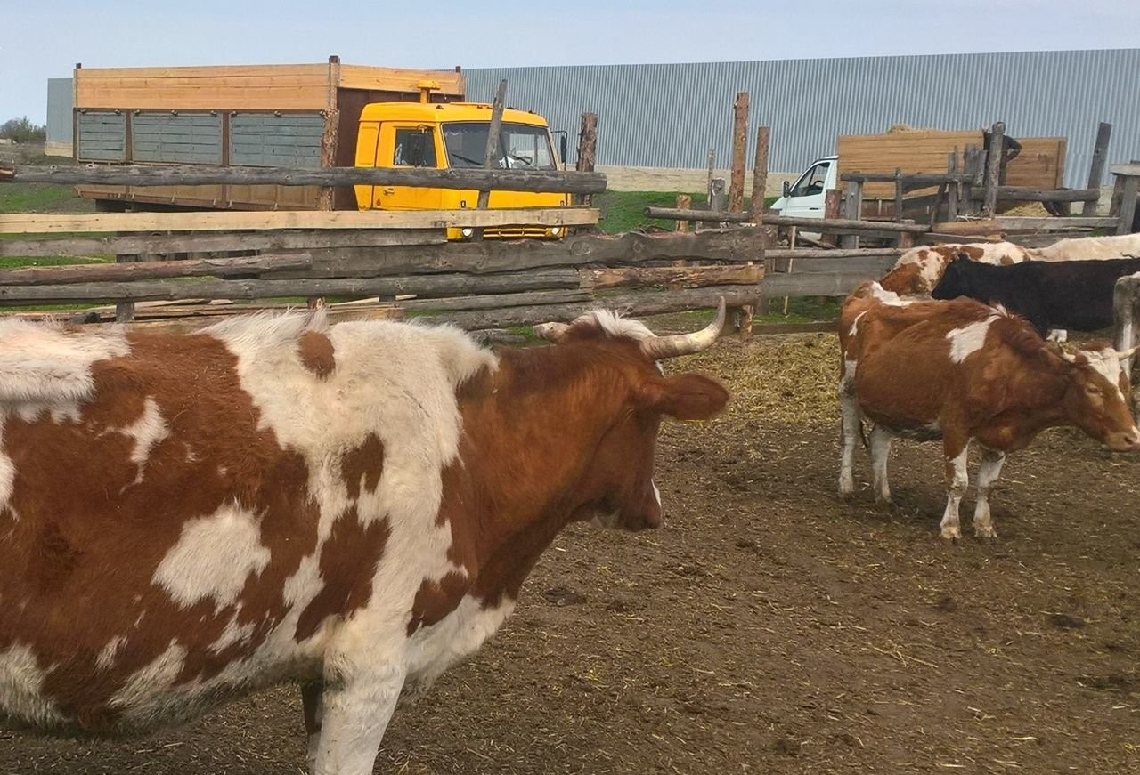 Услуги скотовоза, крс, сельхозживотных - Донское